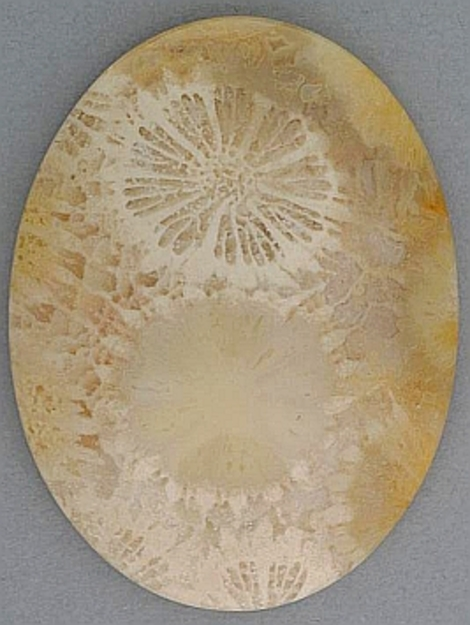 Fossilien Oval 60,77 ct