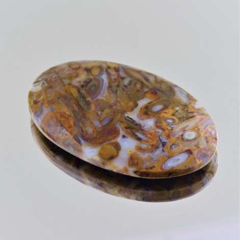 Fossilien oval 48,79 ct