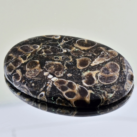 Fossils cabochon oval 112.55 ct