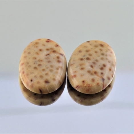 Fossils Pair Cabochons oval 17.86 ct